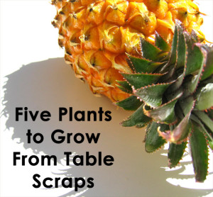 Five Healthy Foods You Can Grow At Home From Scraps