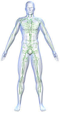 the ins and outs of whole body vibration promolife blog